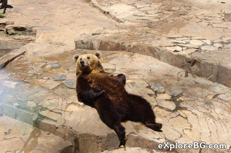 гр. Стара Загора – Зоологическа градина